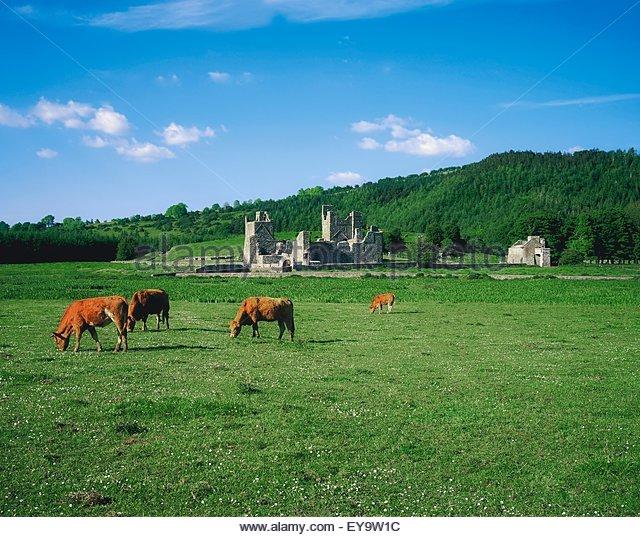 fore-abbey-co-westmeath-ireland-ey9w1c